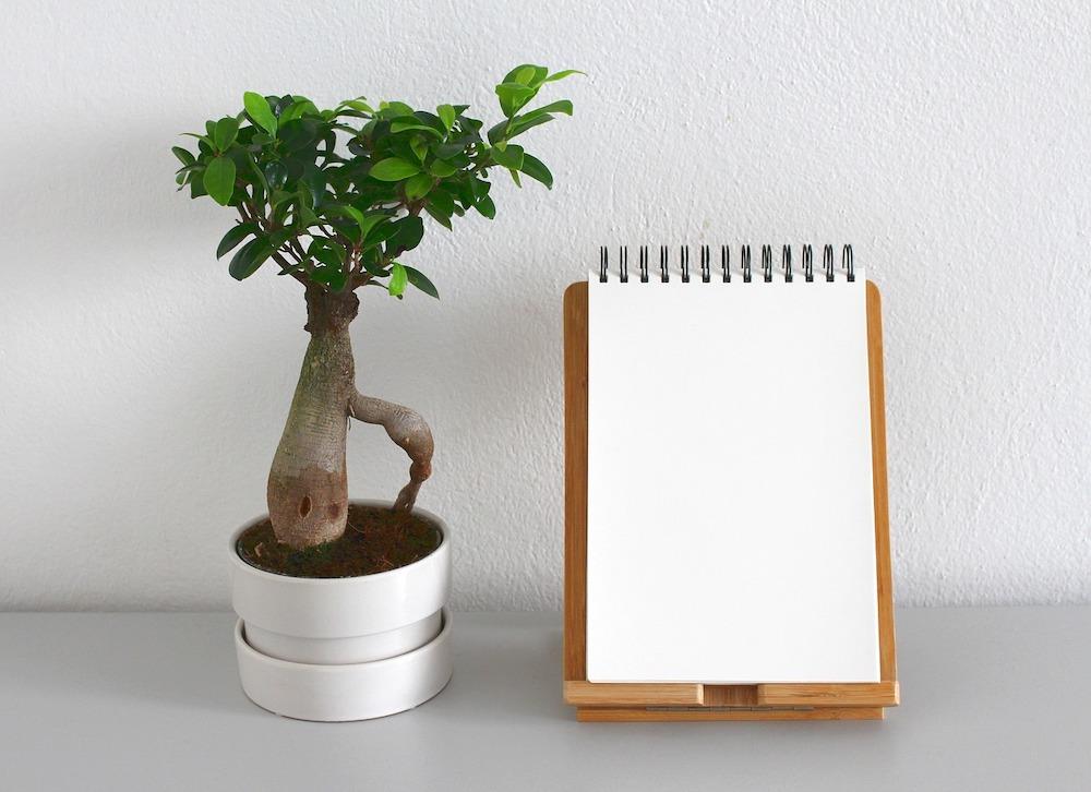 Ein Bonsaibaum und ein leeres Notizbuch vor einer weißen Wand