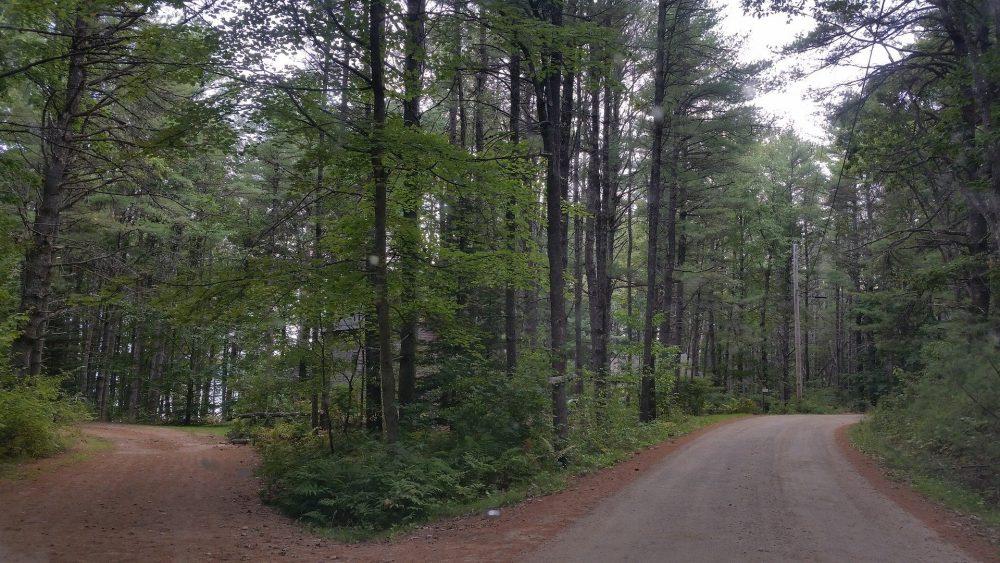 Ein Pfad im Wald teilt sich in zwei Richtungen